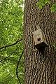 Дуб черешчатый - 1.jpg