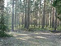 Заполье - panoramio - Алексей Решетников (1).jpg