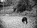 Немного Латгальскй серости и безысходности - panoramio.jpg