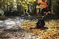 Осінь у дендропарку ЧНУ.jpg