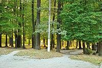 Парк, смт Клевань, 1.jpg