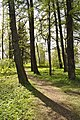 Парк на Елагином острове, деревья.jpg