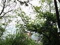 Парк шума Гази Баба во мај (165).JPG