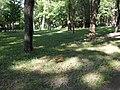 Пуще-Водицький курортний лісопарк, 182.jpg
