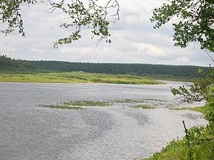 Varzuga River - Image: Река Варзуга