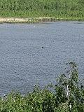 Рыбаки на озере - panoramio.jpg