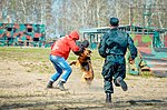 Собаки НГУ 4206 (19167167668).jpg