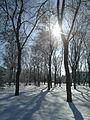 Сонце і дерева.jpg