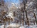Украина, Киев - Голосеевский лес 248.JPG