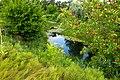 Флора реки Битюг - panoramio.jpg
