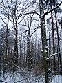 Чернечий Ліс 1.jpg