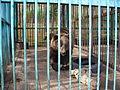 Якутский зоопарк 18.JPG