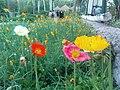 باغ گلها - panoramio (1).jpg