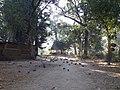 श्लेष्मान्तक वन (मृगस्थली) 07.jpg