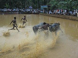 Maramadi - Image: പോത്ത് പൂട്ട്