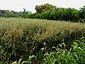 台大農業試驗場 Taiwan University Agricultural Experiment Station - panoramio.jpg