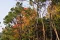 嘉穗公園 Jiasui Park - panoramio.jpg