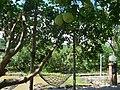 虫二露營區 - panoramio.jpg