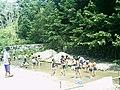 鮎つかみ - panoramio.jpg