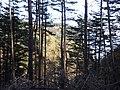 鵜ノ巣断崖南側行き止まりUnosu-dangai - panoramio.jpg