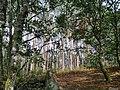 0033 Reserva de la Biosfera Terras do Miño.jpg
