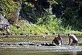 02017 0980 Oslawa, Fluss-Felsen.jpg