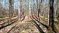04 Grabhügelgruppe im Waldstück Hainbach.jpg