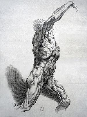 Écorché - Écorché by Paulus Pontius.