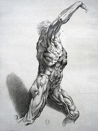 Paulus Pontius - Écorché, after Rubens