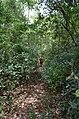 12, Amazonas, Venezuela - panoramio (5).jpg