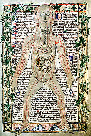 Medieval medicine of Western Europe - 13th-century illustration showing the veins.