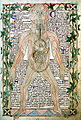 13th century anatomical illustration - sharp.jpg