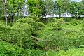 18 Остепненные склоны и балочные леса по правому берегу долины р. Осетрик.jpg