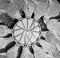 1960 Nourriceuse à agneaux à Brouessy Cliché Jean Joseph Weber-1-cliche Jean Weber.jpg