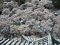 1 Ōtemachi, Aizuwakamatsu-shi, Fukushima-ken 965-0873, Japan - panoramio (14).jpg