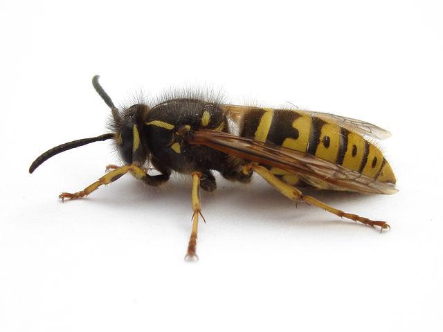 1 wasp 2007-04-25