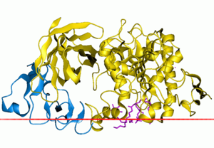 Pancreatic lipase family - Complex of human pancreatic lipase with colipase