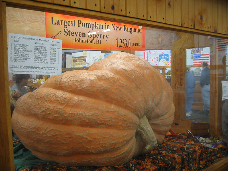 File:2004 Pumpkin Topsfield Massachusetts USA 331582718.jpg