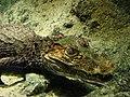 2008-05-17 Coney Island, Long Island 029 Coney Island, New York Aquarium (2677912961).jpg