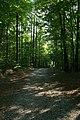 2008-08-18 Entering Duke Forest from Mt Sinai Rd.jpg