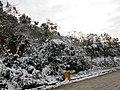 2010年12月15日夜里的那场雪 - panoramio (7).jpg