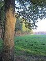 20111120 Drongengoedbos (6).jpg