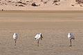 2012-01-20 17-32-48 Spain Canarias Jandía.jpg