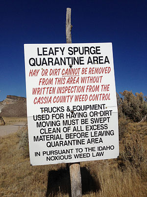 Euphorbia esula - Leafy spurge quarantine sign at the Idaho state line