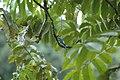 2014 Borneo Luyten-De-Hauwere-Bird-24.jpg