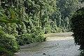2014 Borneo Luyten-De-Hauwere-Forest-08.jpg