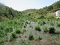 2017-04-19 Castle watermill, Quarteira river, Paderne (2).JPG