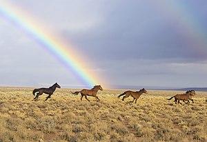 Nye County, Nevada - 350px