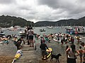 2019 Scotland Island Pittwater NSW Christmas Day pooch race 10.jpg