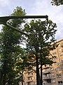 2021-06-04 20-43-28 - Fontainebleau - Anneau de gymnastique.jpg